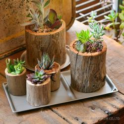 トリートレイを観葉植物を置くプレートとして使用